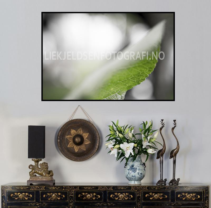 høstfarger sorthvitgrønn