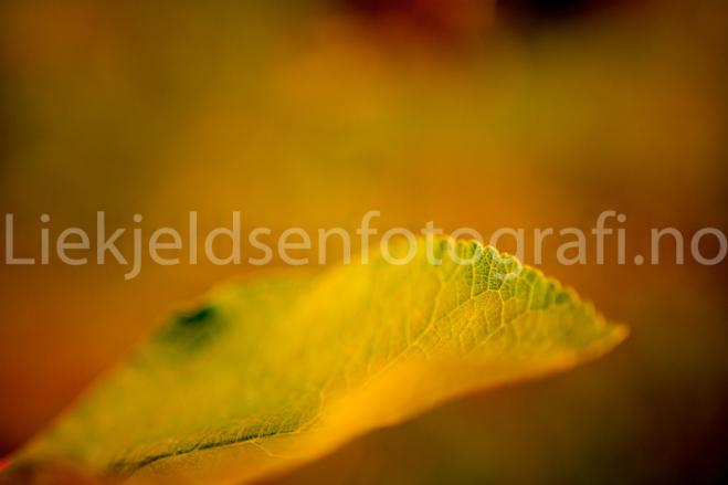 liekjeldsenfotografi-6102
