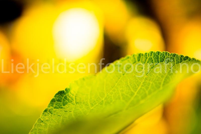 liekjeldsenfotografi-6104